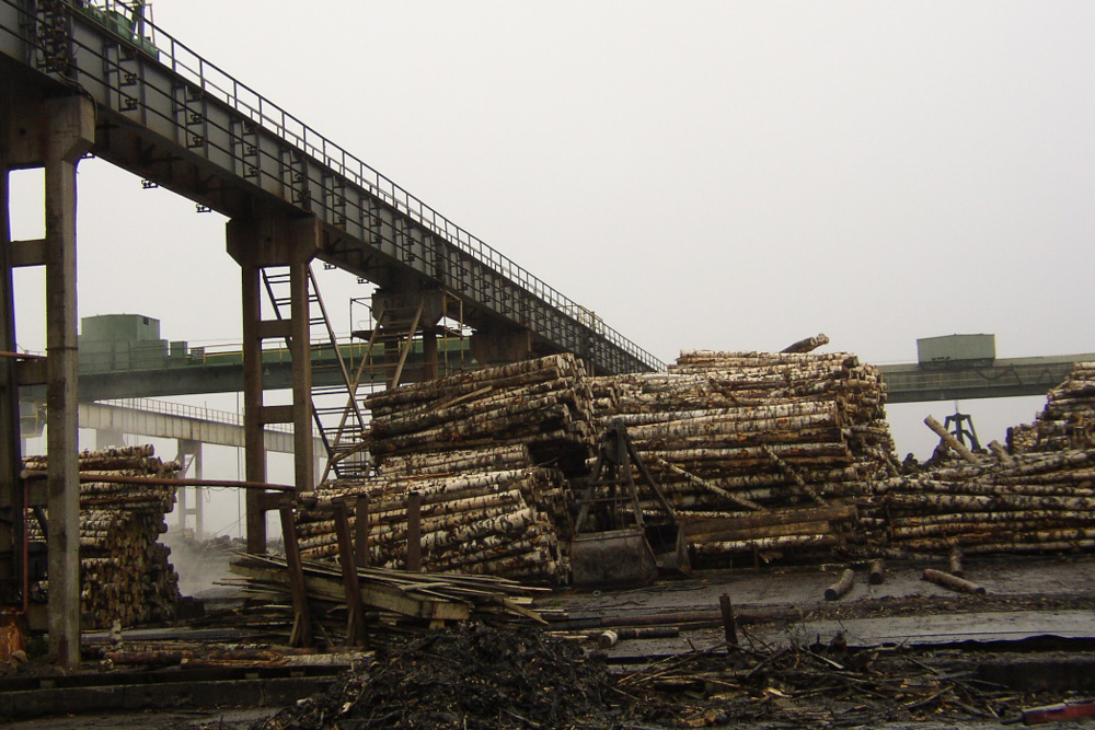 2004 - 09 | Arkhangelsk, Russia: timber project